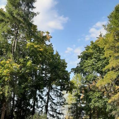 Парк усадьбы Мелихово